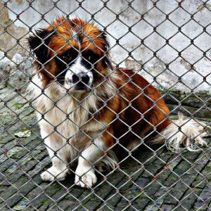 L'abandon: un traumatisme bel et bien réel pour les animaux