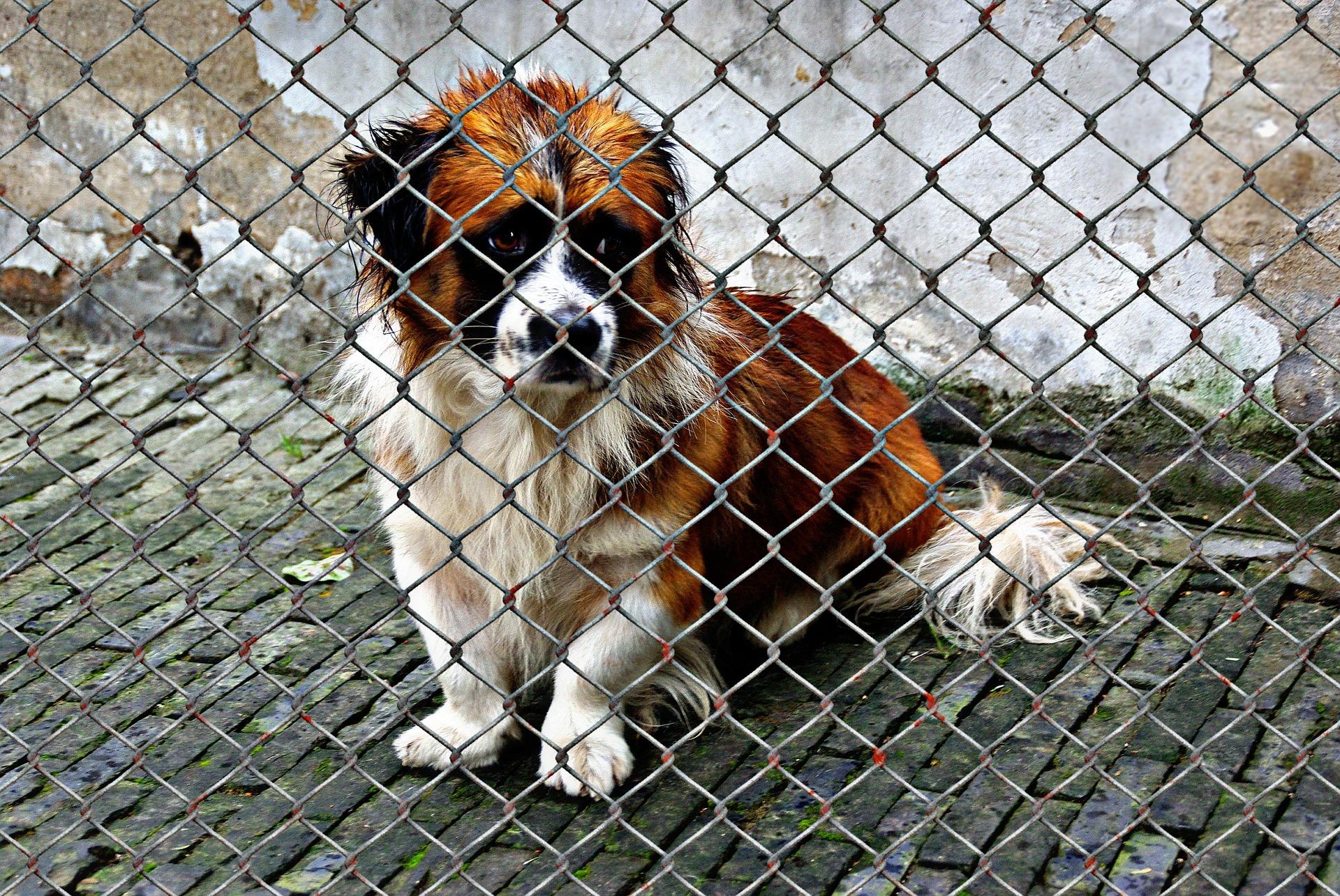 abandon animaux traumatisme