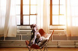 Adopter un chien en appartement: bonne ou mauvaise idée?