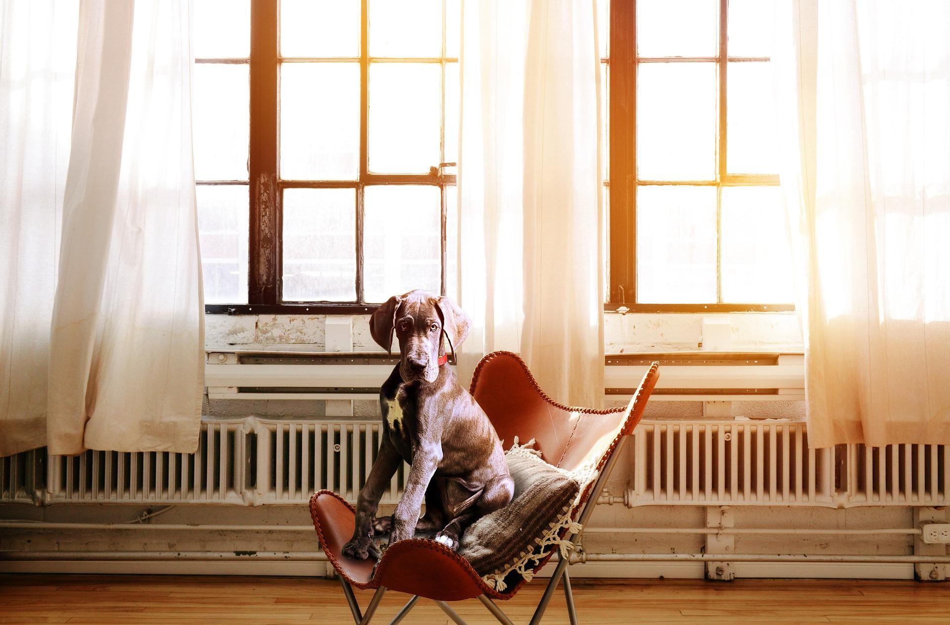 chien appartement bonne ou mauvaise idée