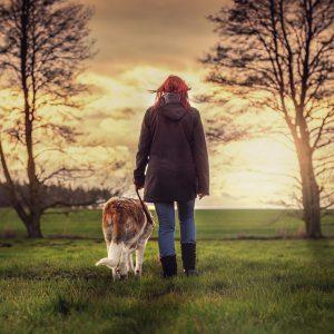 Promenade : 7 conseils pour gérer une rencontre entre chiens