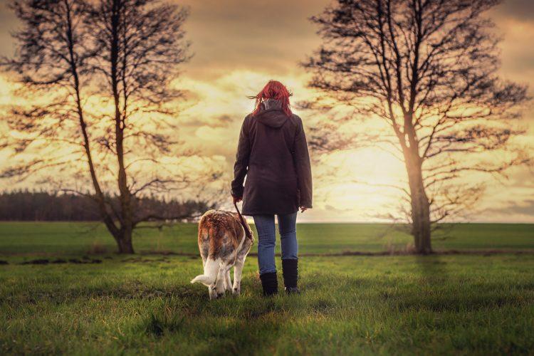 promenade gérer rencontre entre chiens