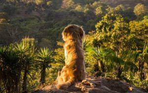 Canicule: comment protéger efficacement son chien?