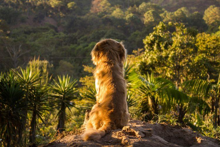 canicule comment protéger son chien