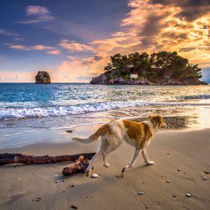 Plage : quels sont les dangers à prendre en compte pour son chien ?