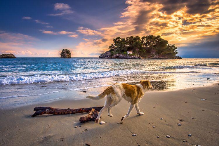 dangers de la plage pour les chiens