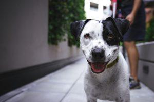 Chiot : pourquoi aller voir un éducateur canin ?