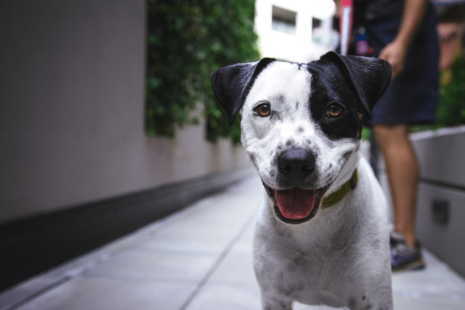 chiot importance éducateur canin