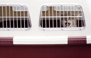 Été 2018: un nouveau record pour les abandons d'animaux