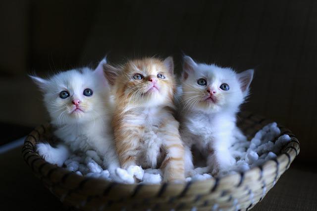 couleur chat et caractère