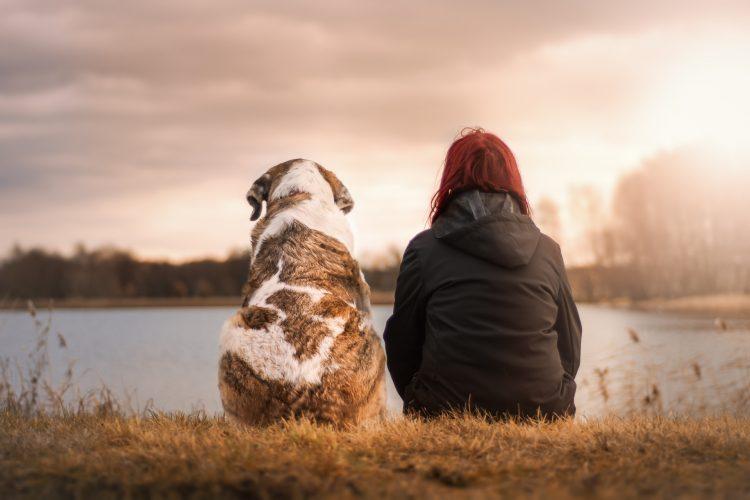 chien guide que dit la loi