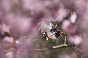 8 conseils pour rassurer un chat peureux