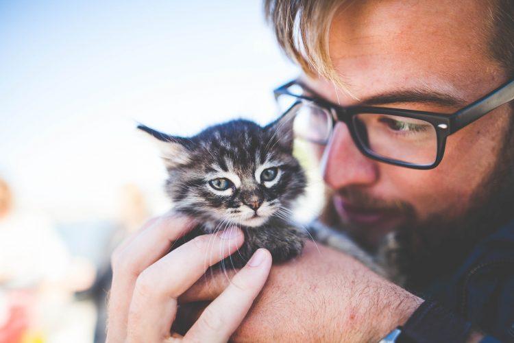 éducation positive pour chat