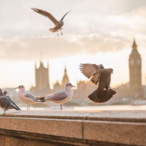 L'importance d'aider les oiseaux à se protéger des fortes vagues de chaleur