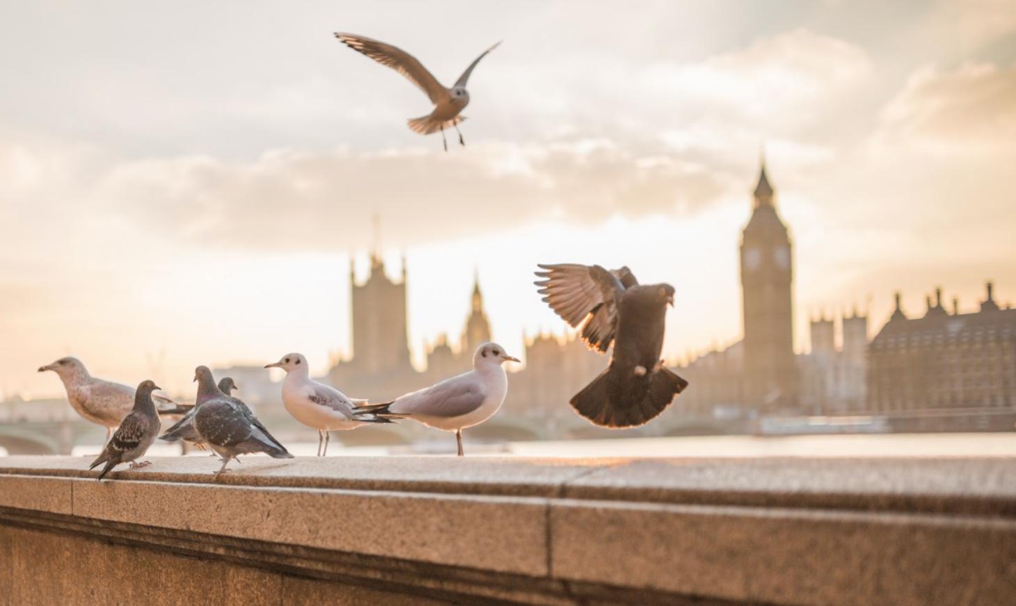 Comment aider les oiseaux pendant la canicule
