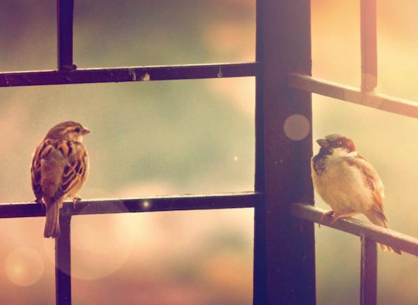 La canicule est particulièrement dangereuse pour les oiseaux