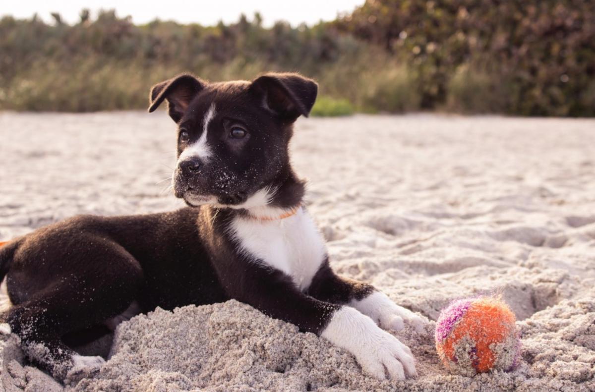 Protéger les coussinets de son chien pendant l'été