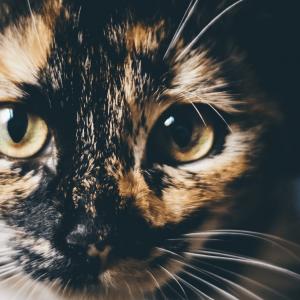 La communication animale, chat vous parle?