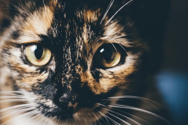 Qu'est-ce que la communication animale et à quoi ça sert ?