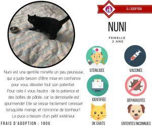 chats à l'adoption LYON association