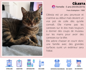 chats à l'adoption LYON association