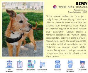 Chien à l'adoption association Lyon