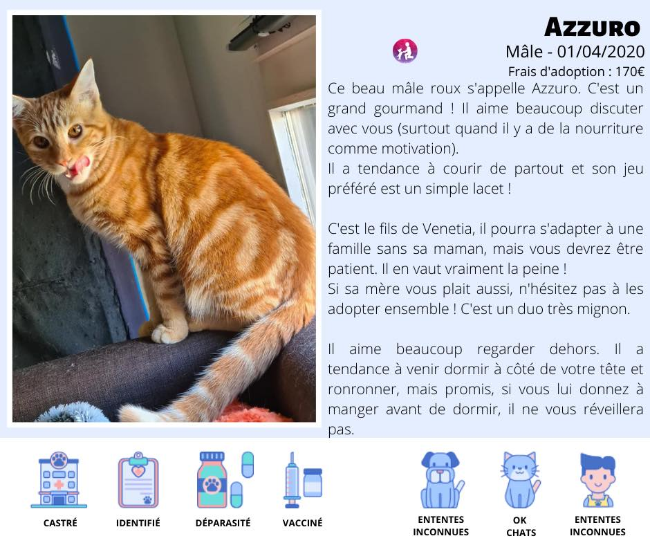 Chats A L Adoption Lyon Association Sans Croquettes Fixes