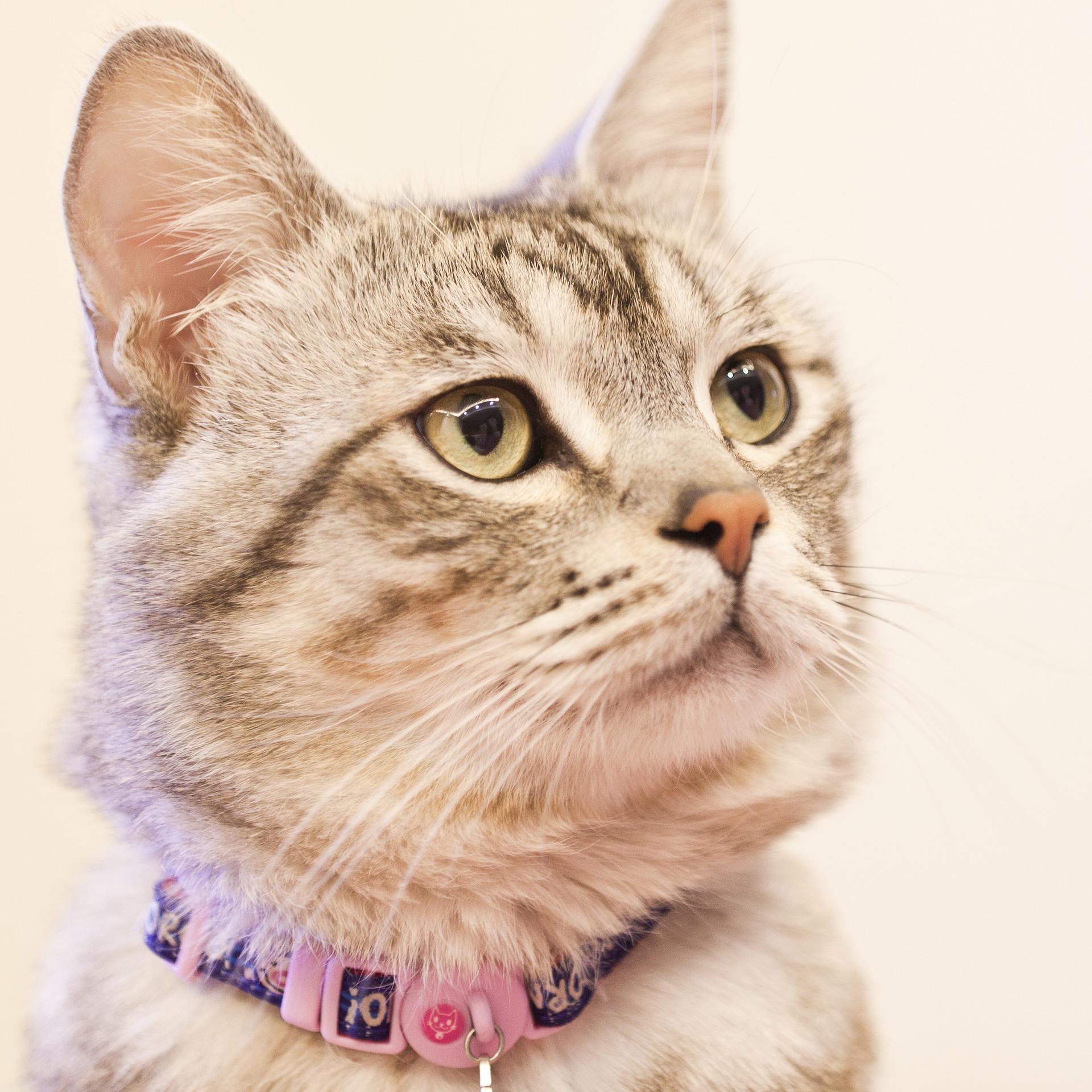 danger collier pour chat