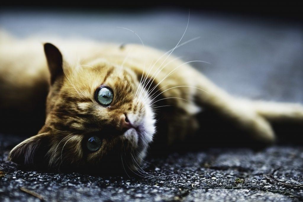 aider un chat renversé par une voiture