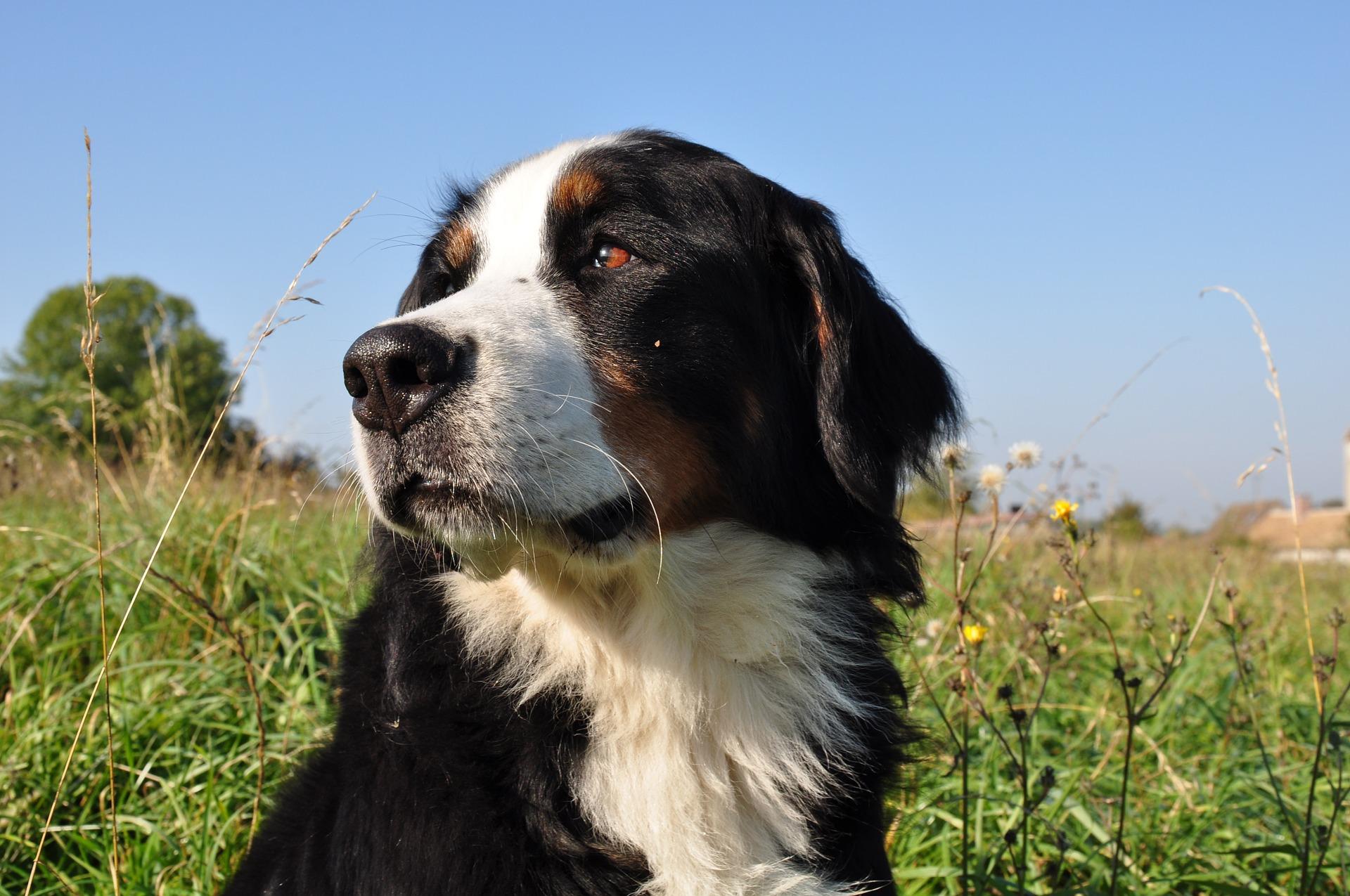 5 idées pour faire garder vos animaux pendant vos vacances