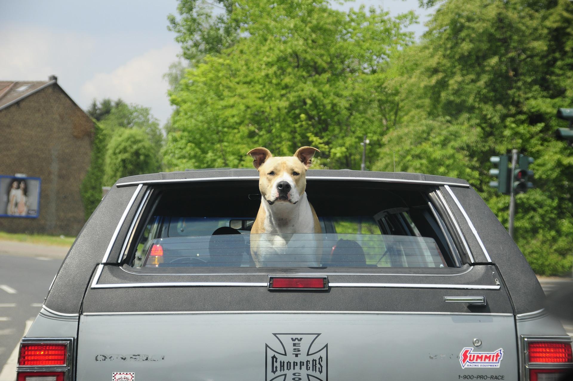 chien et voiture, comment faire pour voyager en toute sécurité