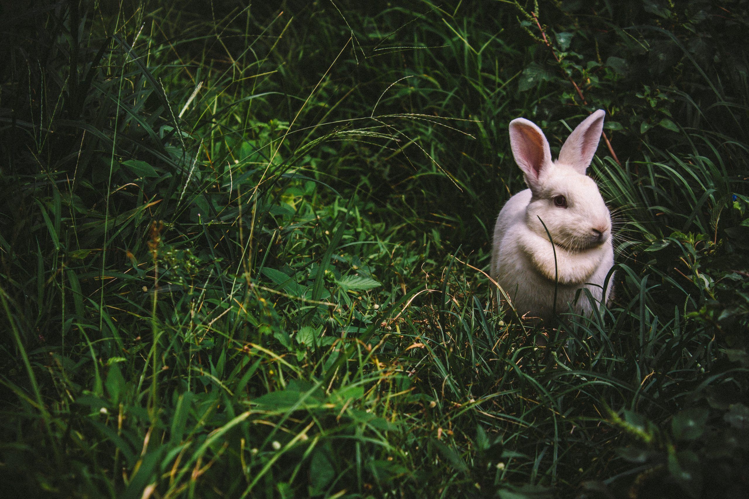 idées reçues sur les lapins