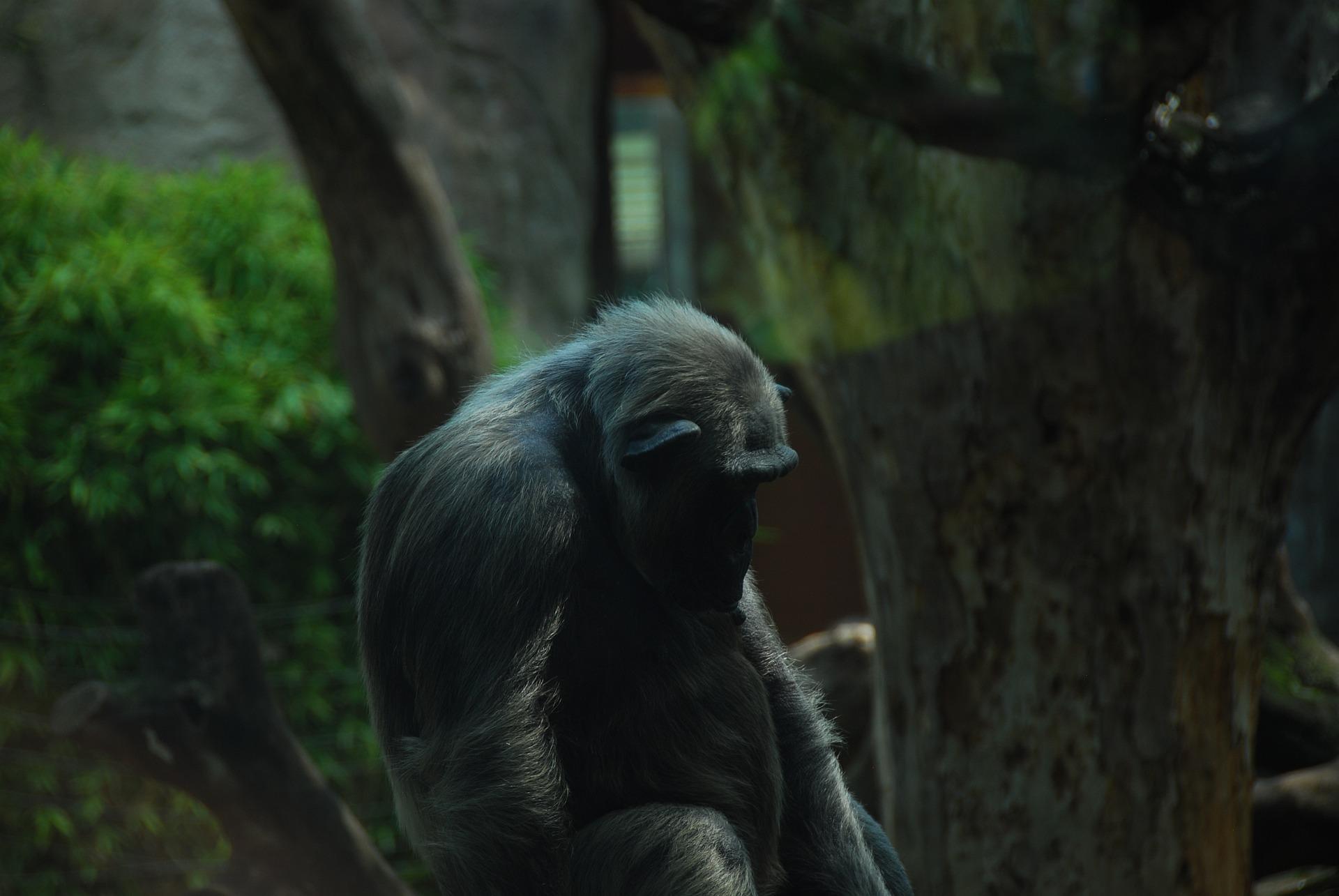 shutterstock interdit les photos de singes hors de leur milieu naturel