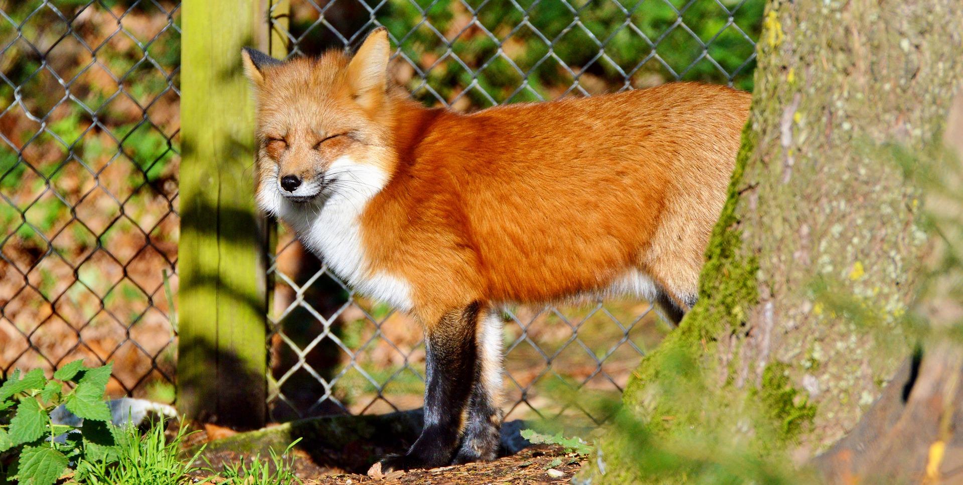 alternatives à la captivité des animaux