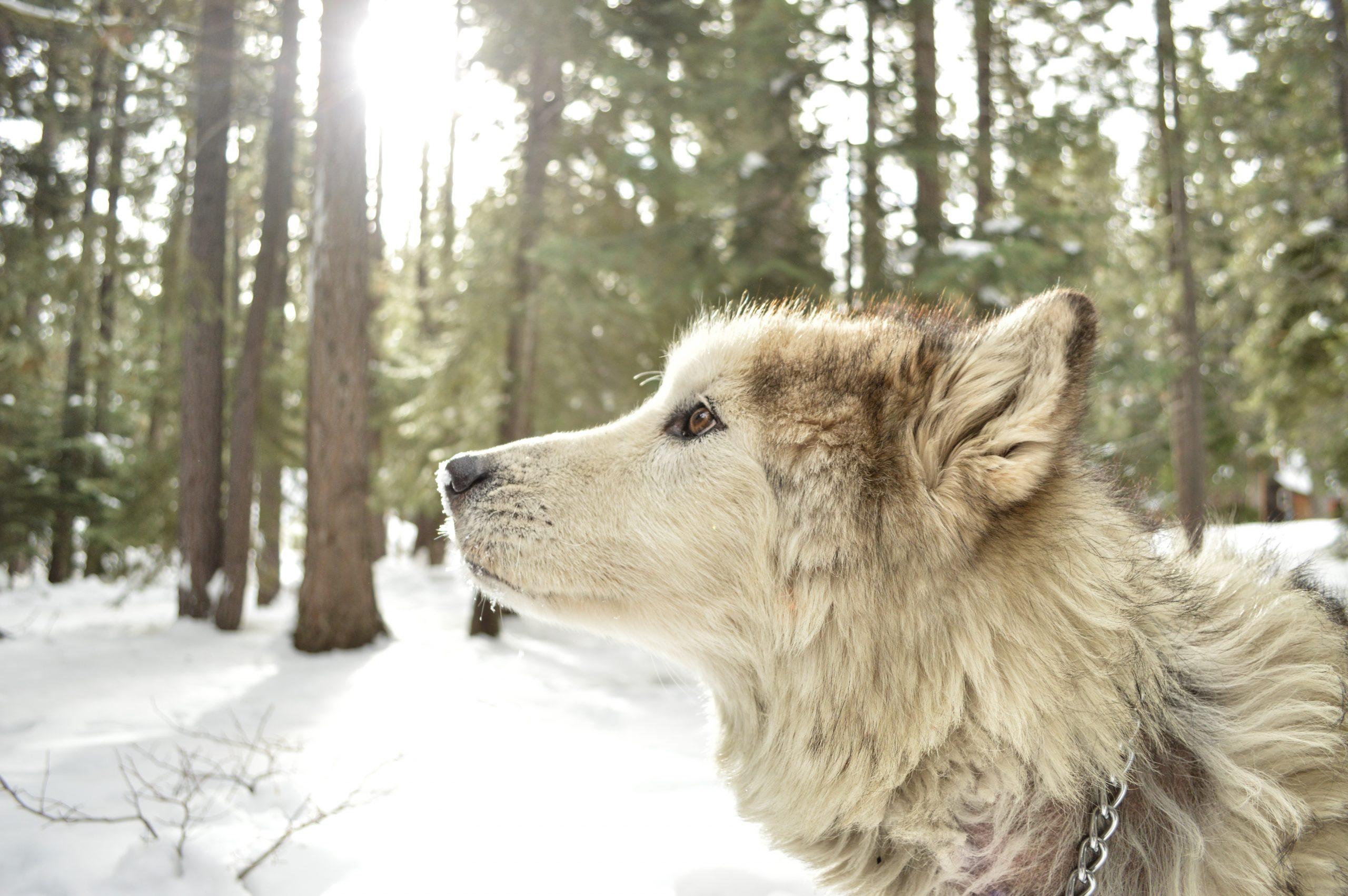 chien beau poil