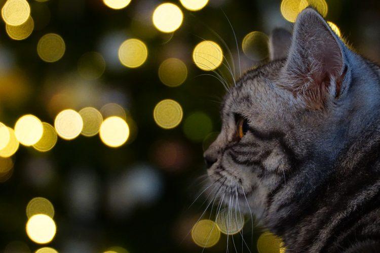 chat : comment déchiffrer un tatouage illisible ? - sans croquettes