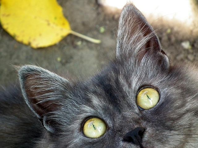 rassurer un chat peureux