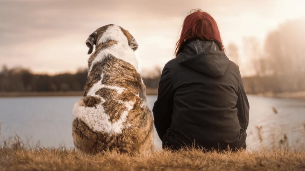 Définition de la communication animale