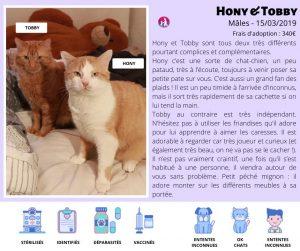 Chats à l'adoption LYON